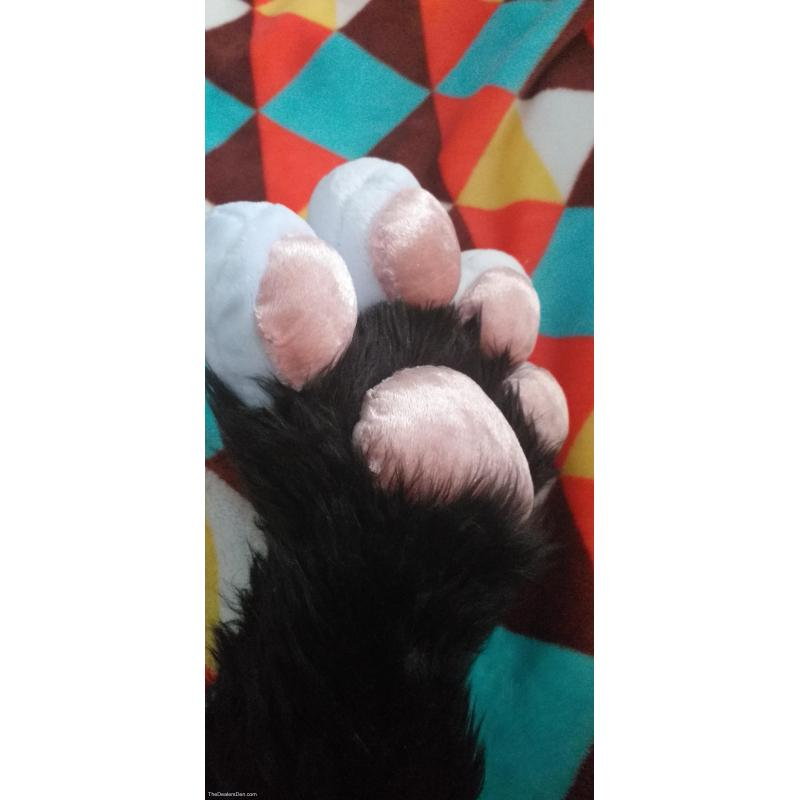 Puffy Paws Commission!