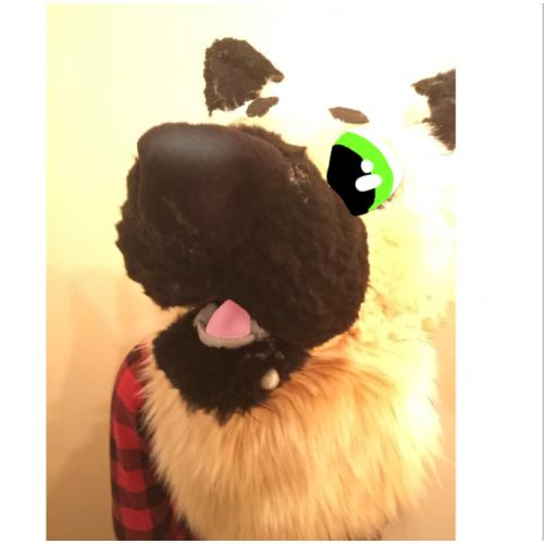 Fursuit pic edits